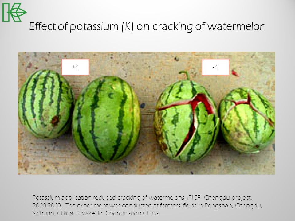 Effect of potassium (K) on cracking of watermelon