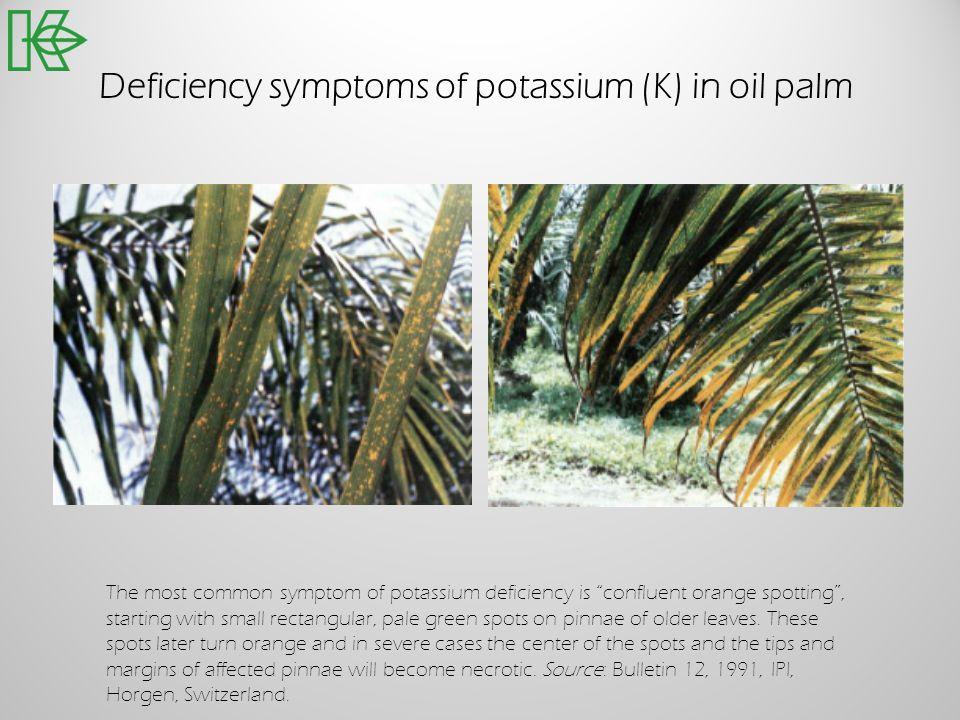 Deficiency symptoms of potassium (K) in oil palm