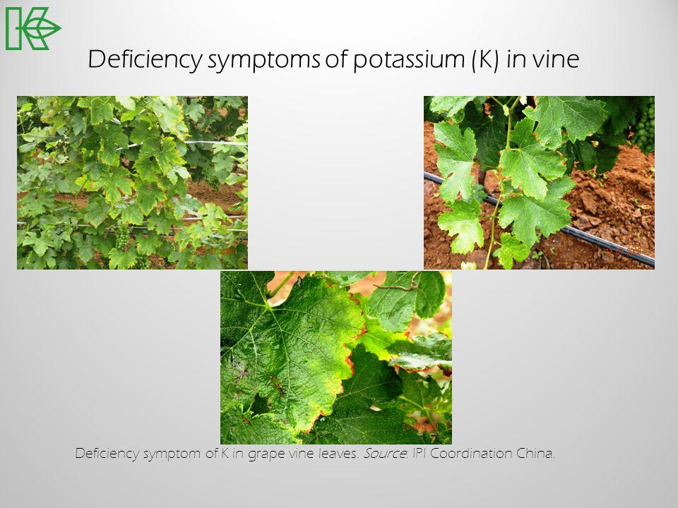 Deficiency symptoms of potassium (K) in vine