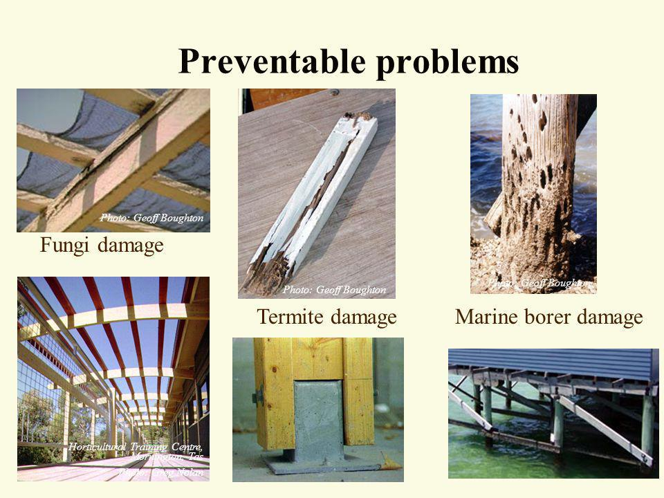 Preventable problems Fungi damage Termite damage Marine borer damage