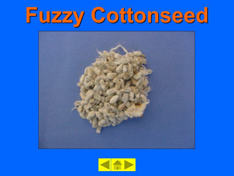 Fuzzy Cottonseed