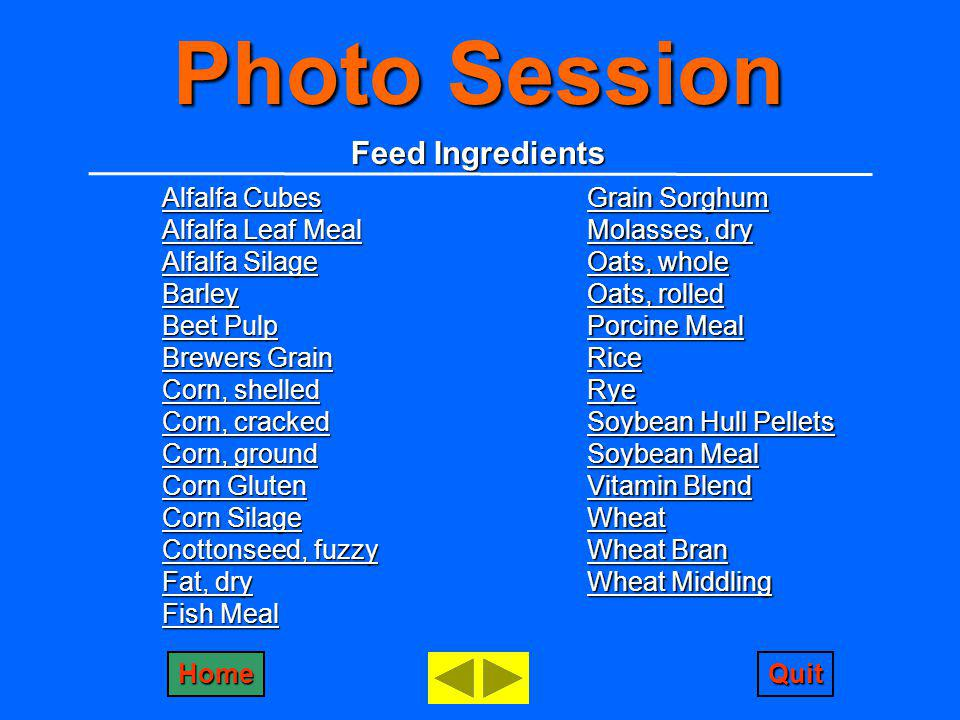 Photo Session Feed Ingredients