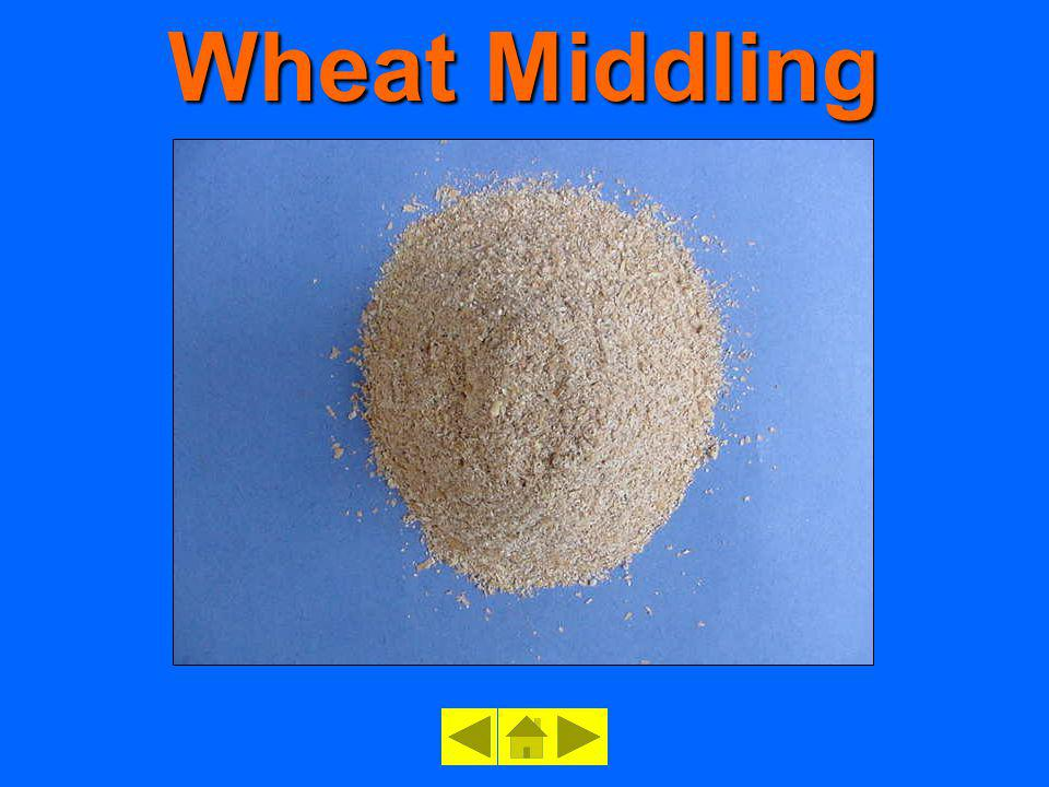 Wheat Middling