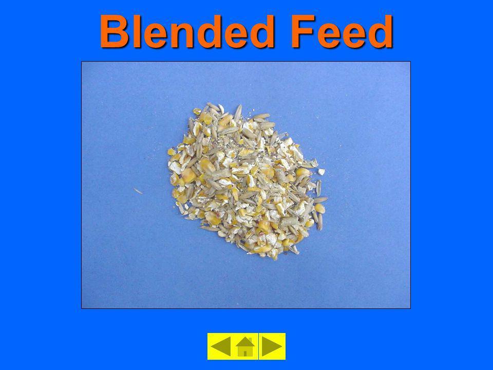 Blended Feed