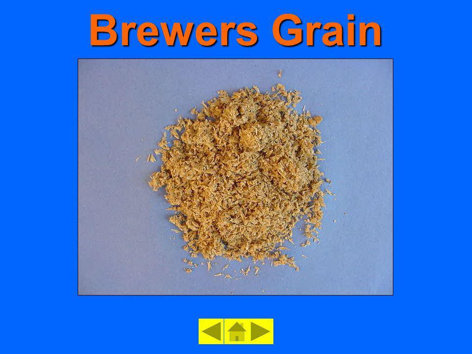 Brewers Grain