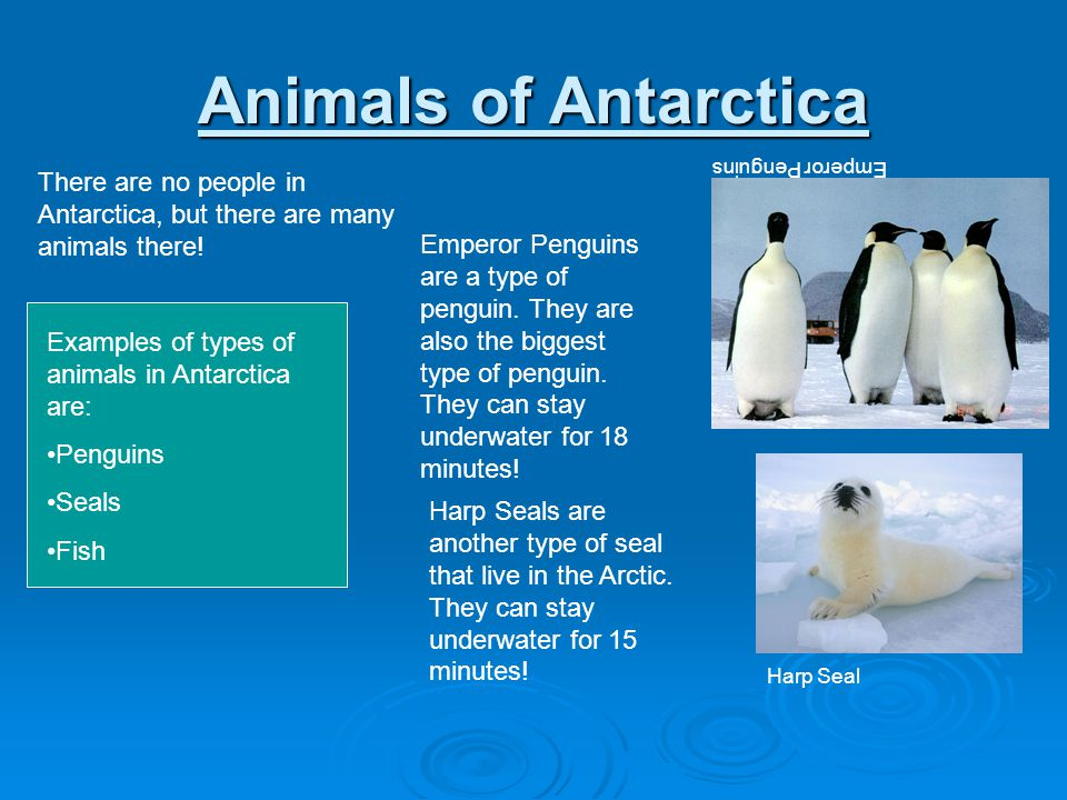 Animals of Antarctica Emperor Penguins. There are no people in Antarctica, but there are many animals there!