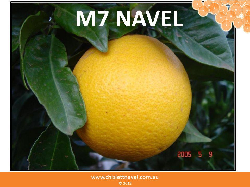 www.chislettnavel.com.au ©