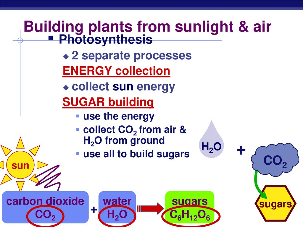 Building plants from sunlight & air