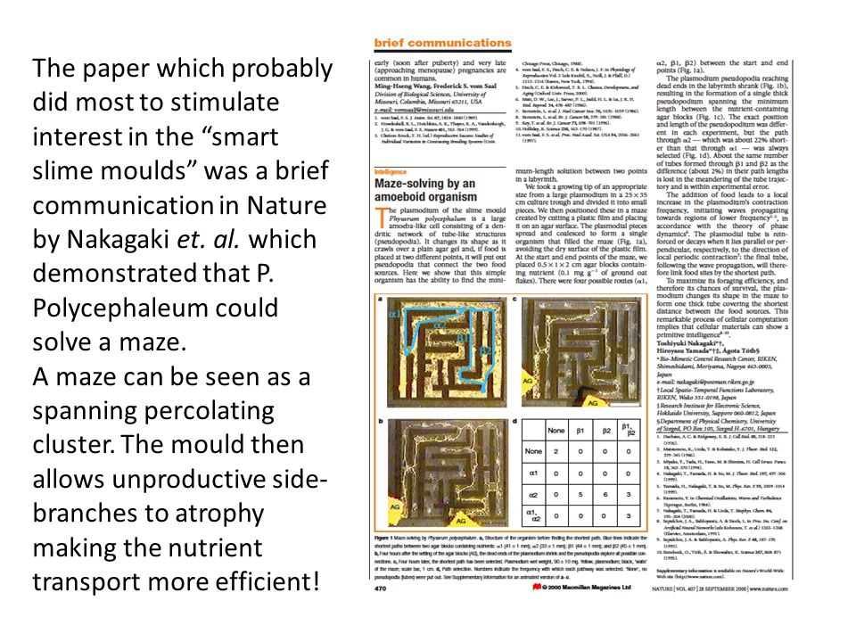 The paper which probably did most to stimulate interest in the smart slime moulds was a brief communication in Nature by Nakagaki et. al. which demonstrated that P. Polycephaleum could solve a maze.