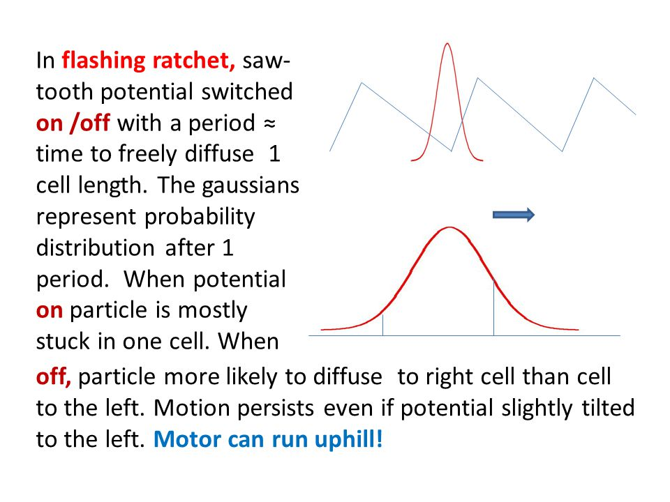 In flashing ratchet, saw-tooth potential switched on /off with a period ≈ time to freely diffuse 1 cell length. The gaussians represent probability distribution after 1 period. When potential on particle is mostly stuck in one cell. When