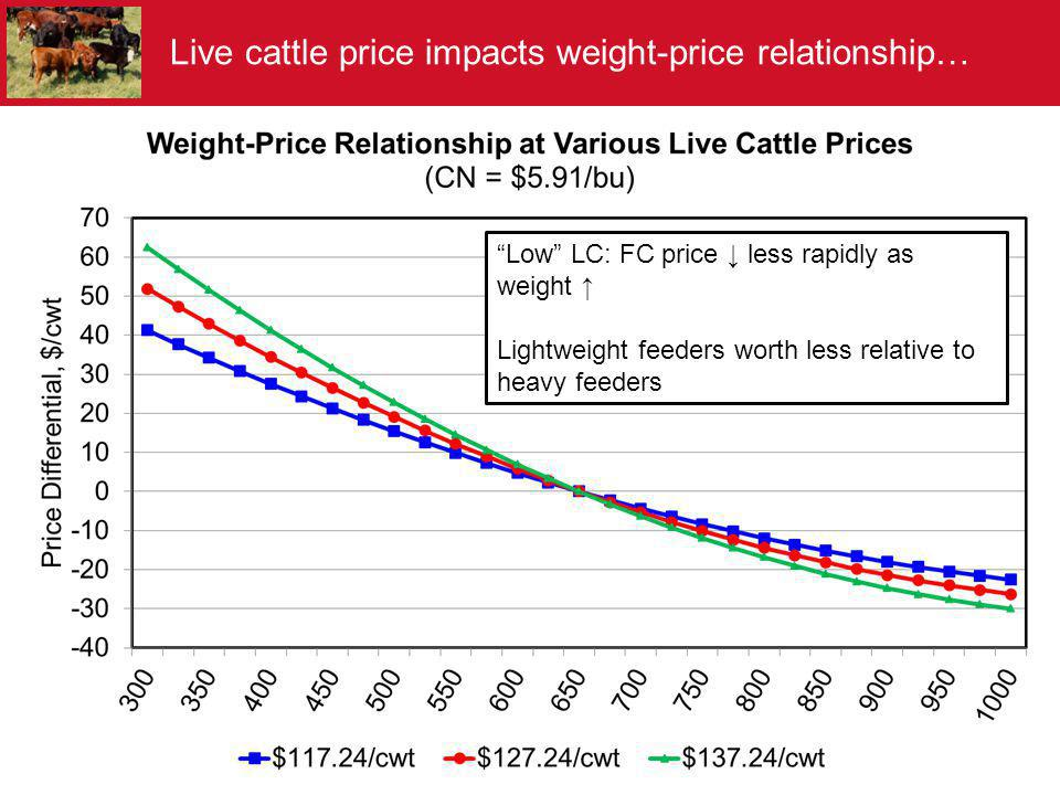 Live cattle price impacts weight-price relationship…