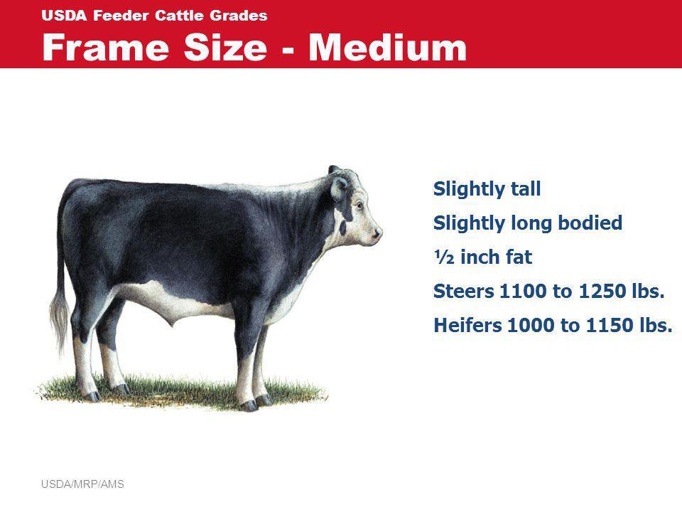 USDA Feeder Cattle Grades Frame Size - Medium