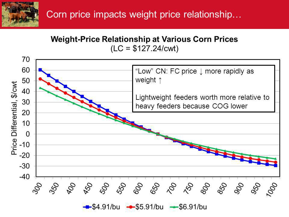 Corn price impacts weight price relationship…