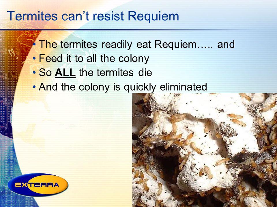 Termites can't resist Requiem