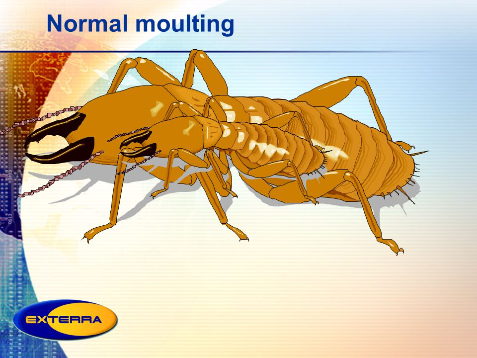 Normal moulting