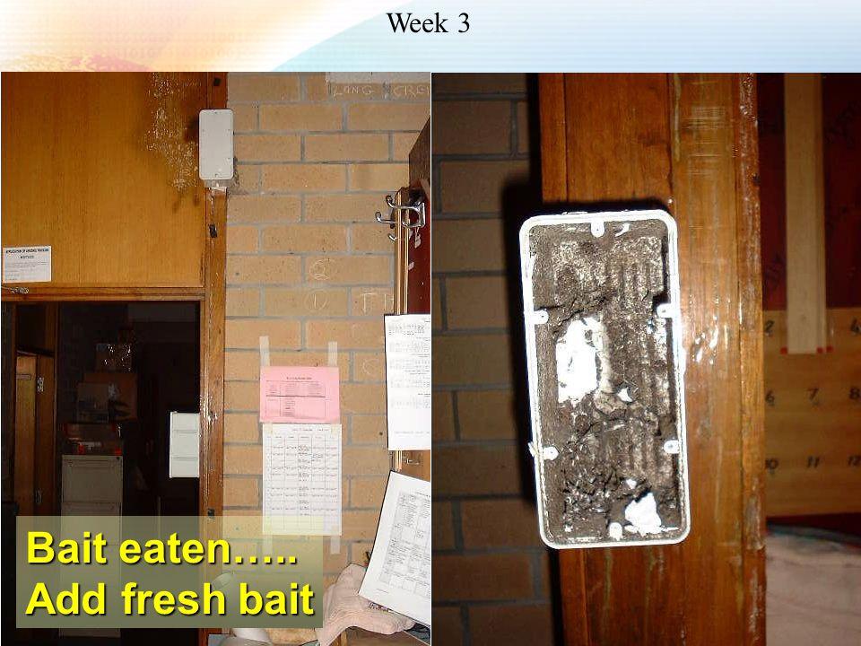 Bait eaten….. Add fresh bait Week 3