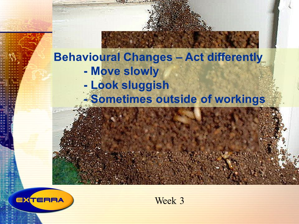 Behavioural Changes – Act differently - Move slowly - Look sluggish