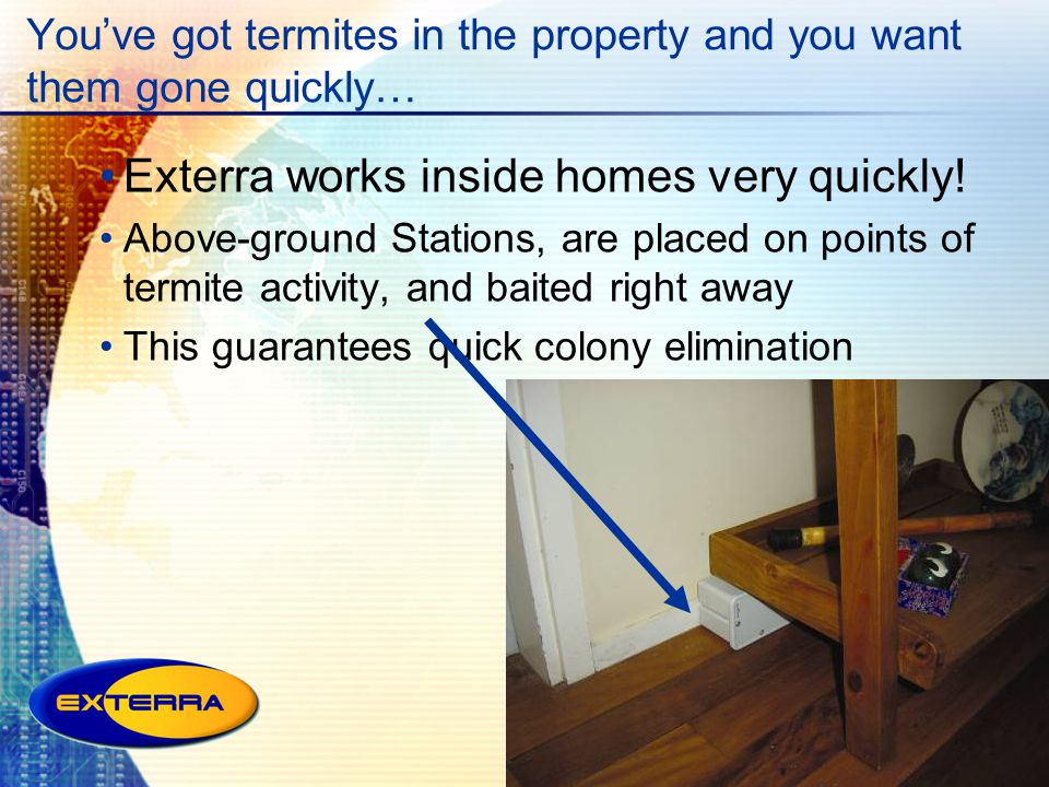You've got termites in the property and you want them gone quickly…