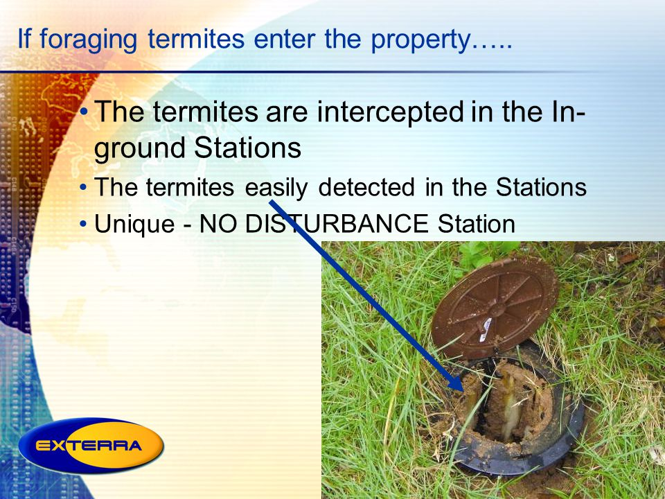 If foraging termites enter the property…..