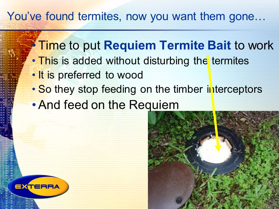 You've found termites, now you want them gone…