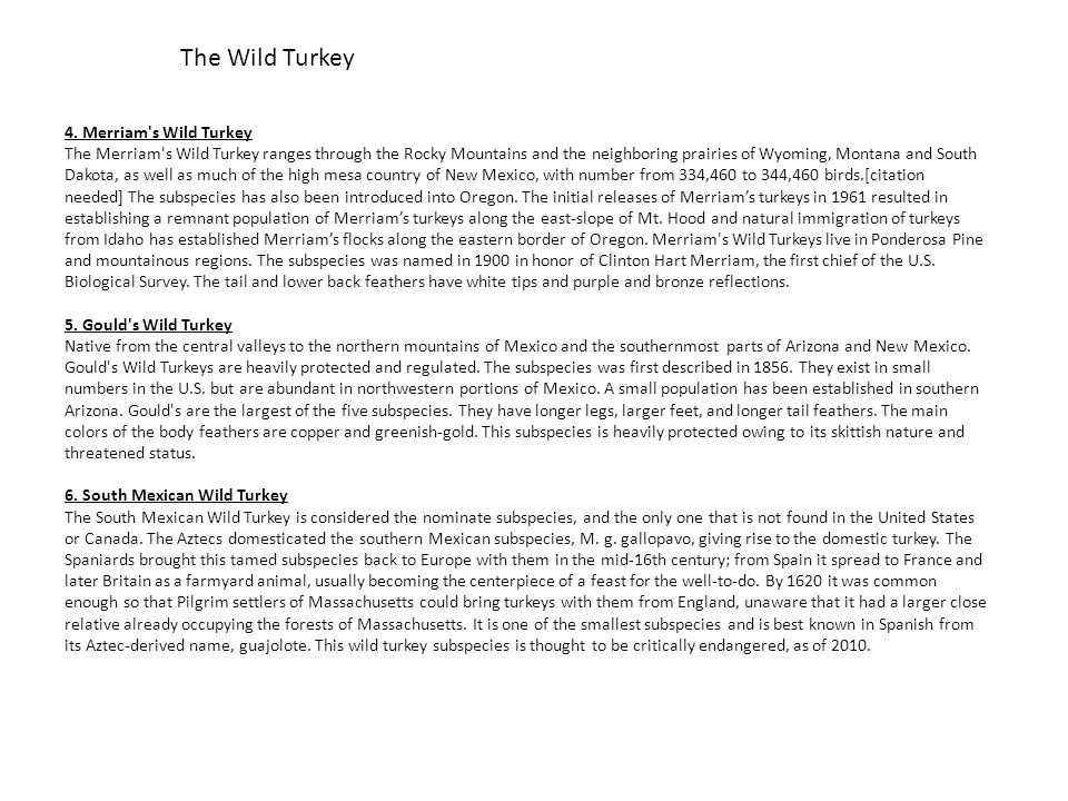 The Wild Turkey 4. Merriam s Wild Turkey