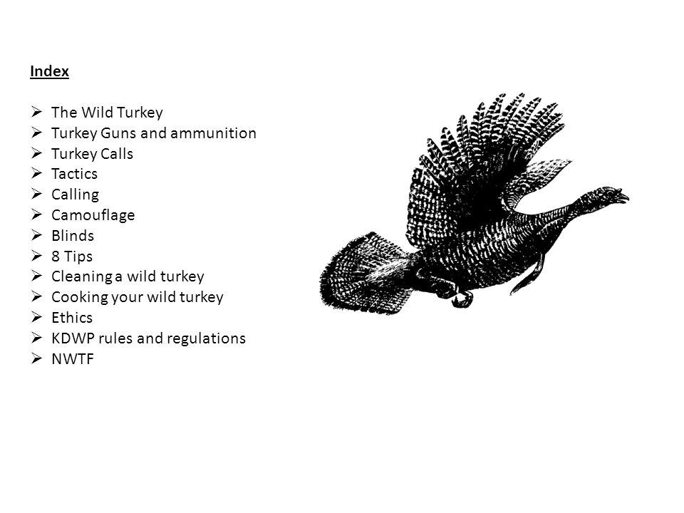 Index The Wild Turkey. Turkey Guns and ammunition. Turkey Calls. Tactics. Calling. Camouflage.