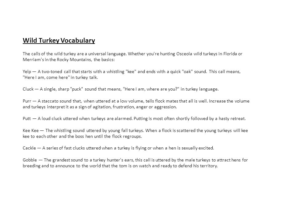 Wild Turkey Vocabulary