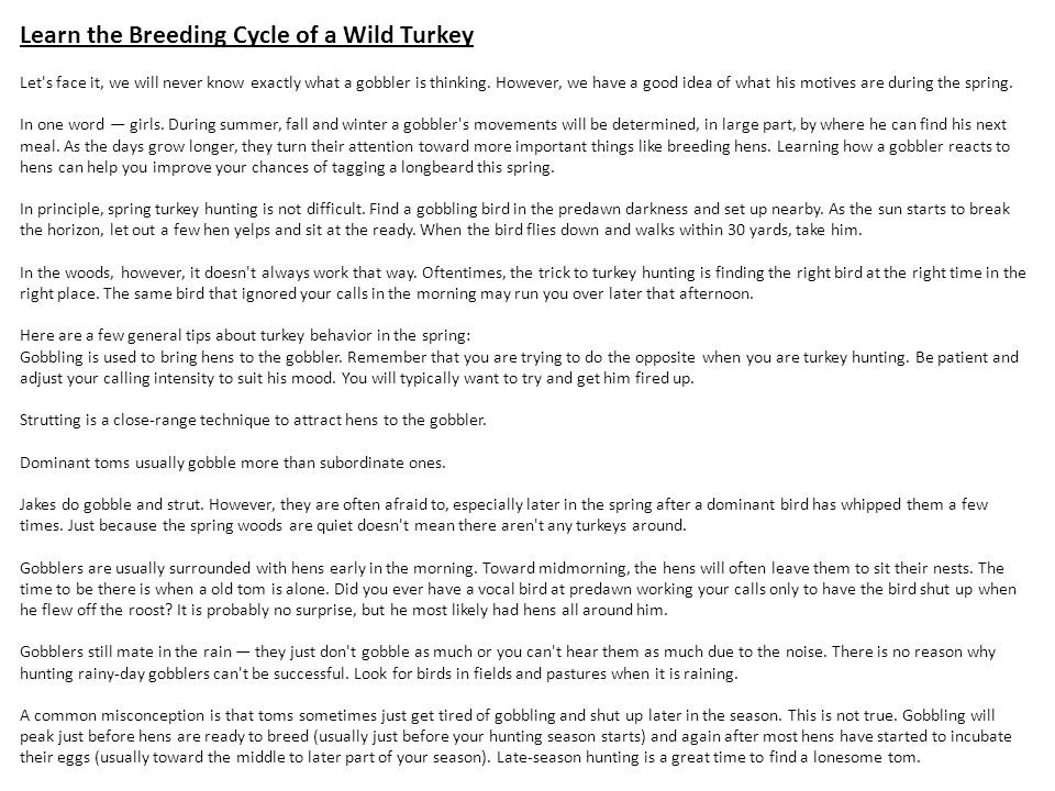 Learn the Breeding Cycle of a Wild Turkey