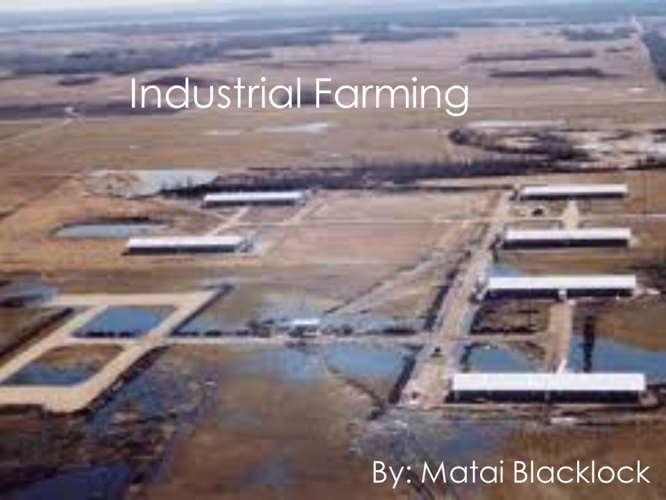 Industrial Farming By: Matai Blacklock