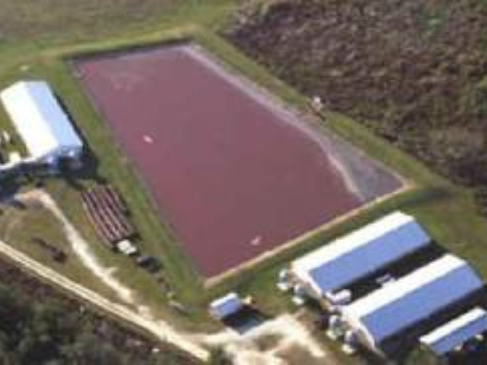 factory farm owners allow waste to collect in open-air lagoons, where it is mixed with water and then sprayed onto surrounding fields, polluting ground water, such as wells and aquifers, and surface water, such as streams, ponds and lakes.