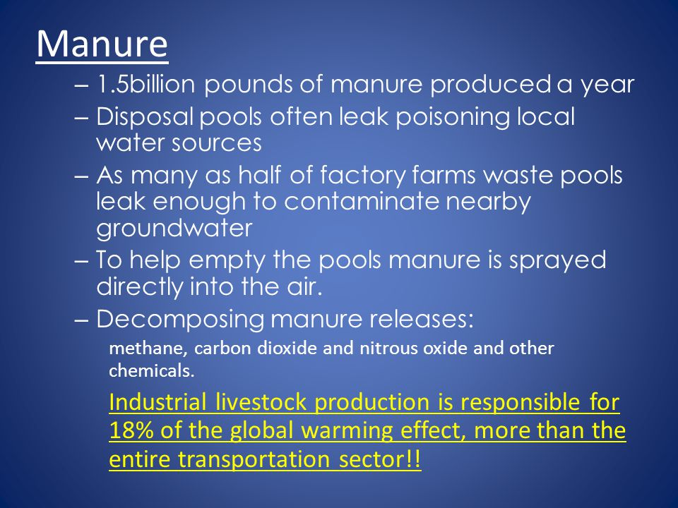 Manure 1.5billion pounds of manure produced a year. Disposal pools often leak poisoning local water sources.