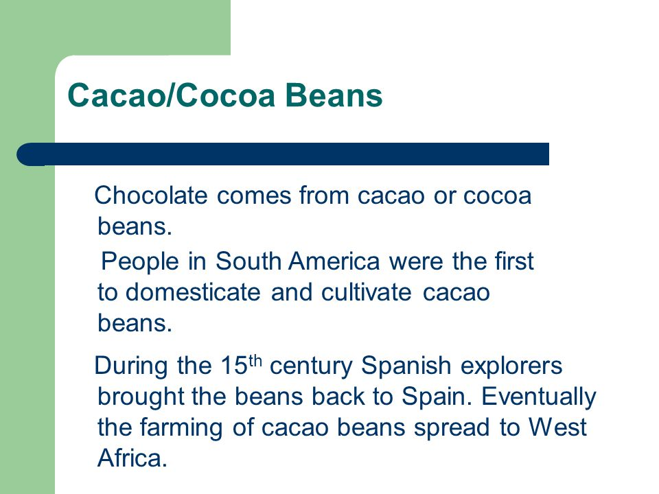 Cacao/Cocoa Beans Chocolate comes from cacao or cocoa beans.