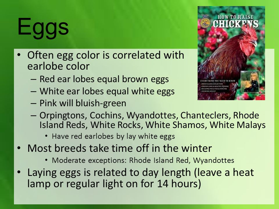Eggs Often egg color is correlated with earlobe color