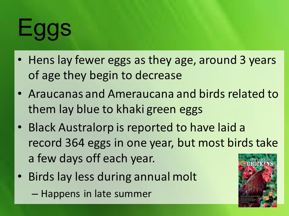 Eggs Hens lay fewer eggs as they age, around 3 years of age they begin to decrease.