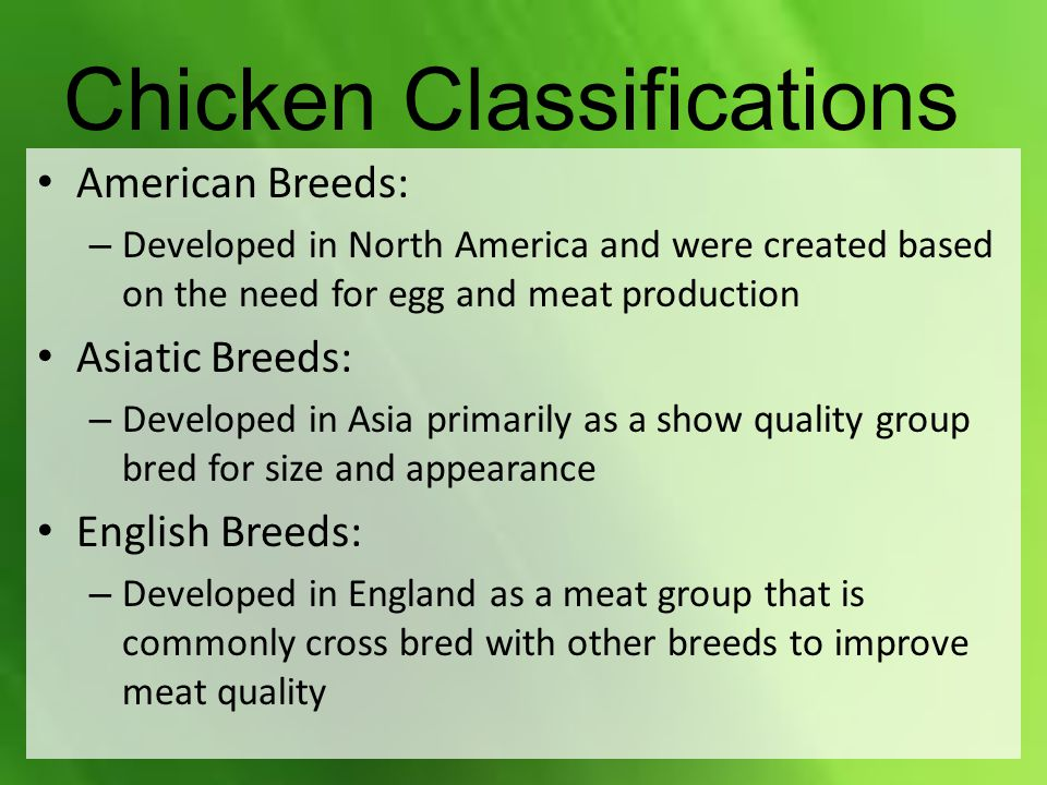 Chicken Classifications