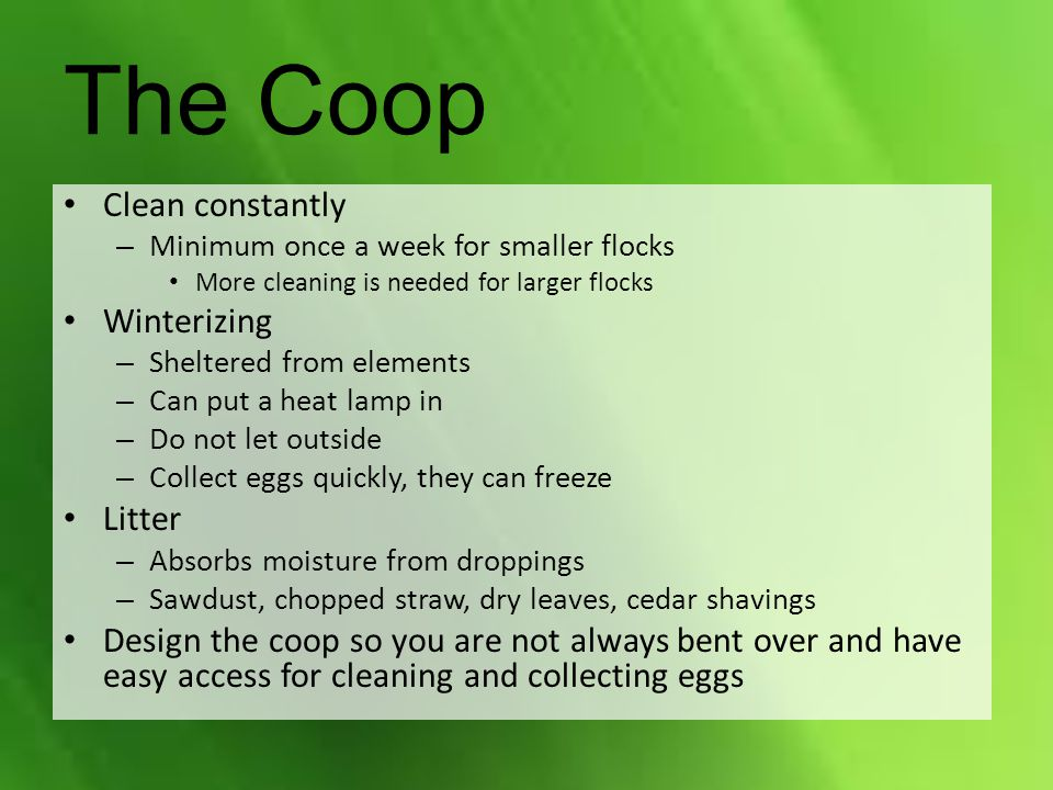 The Coop Clean constantly Winterizing Litter