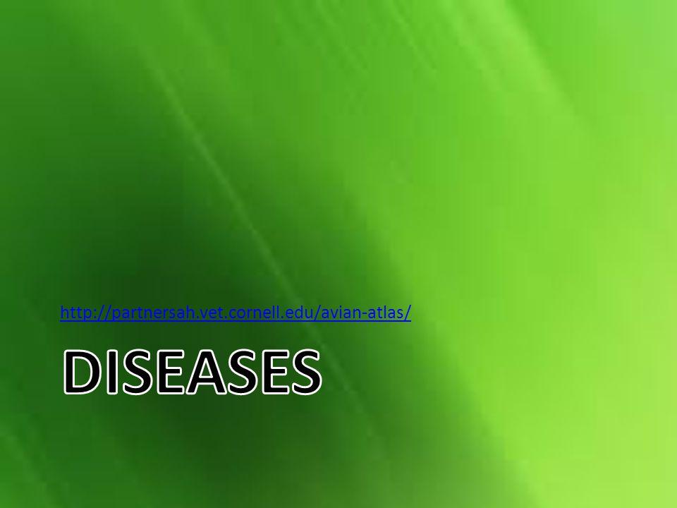 http://partnersah.vet.cornell.edu/avian-atlas/ Diseases