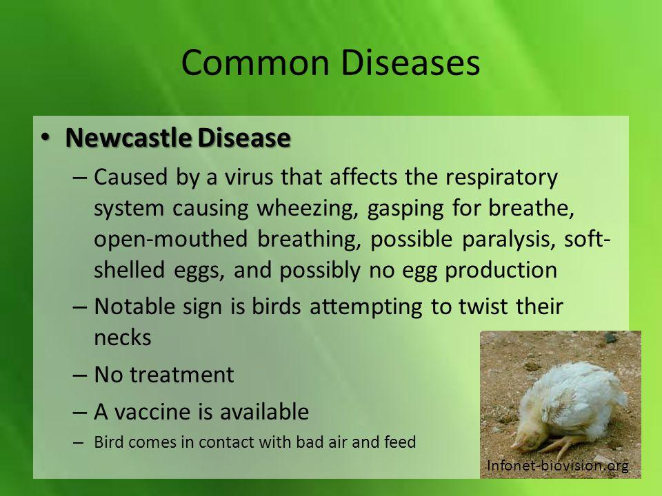 Common Diseases Newcastle Disease