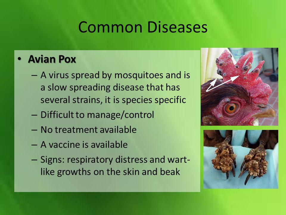 Common Diseases Avian Pox