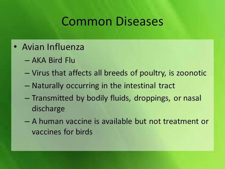 Common Diseases Avian Influenza AKA Bird Flu