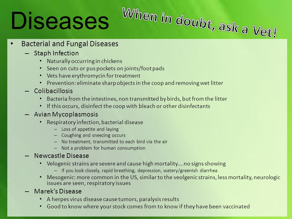 Diseases When in doubt, ask a Vet! Bacterial and Fungal Diseases
