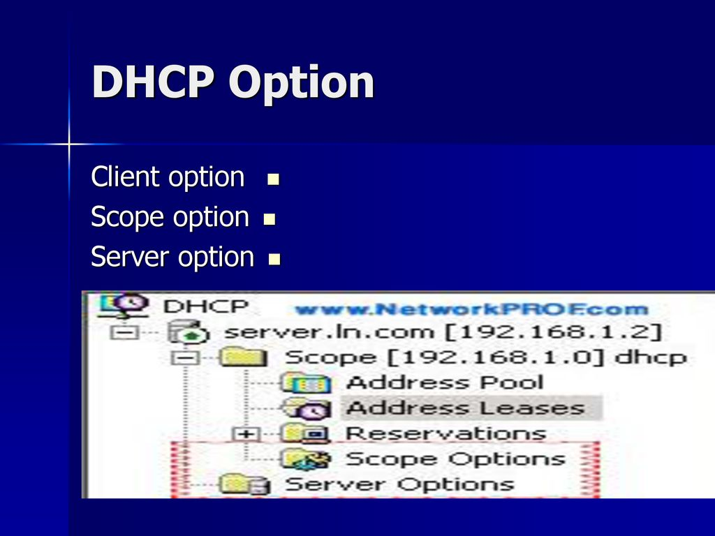 DHCP Option Client option Scope option Server option