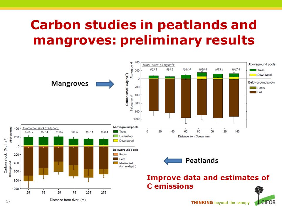Carbon studies in peatlands and mangroves: preliminary results