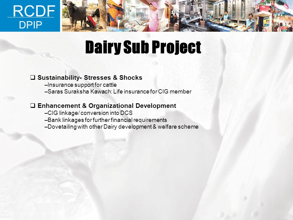 Dairy Sub Project RCDF DPIP Sustainability- Stresses & Shocks