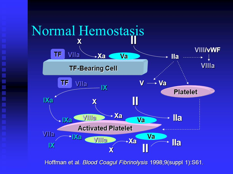 Normal Hemostasis II II II IIa IIa X VIII/vWF TF VIIa Xa Va IIa