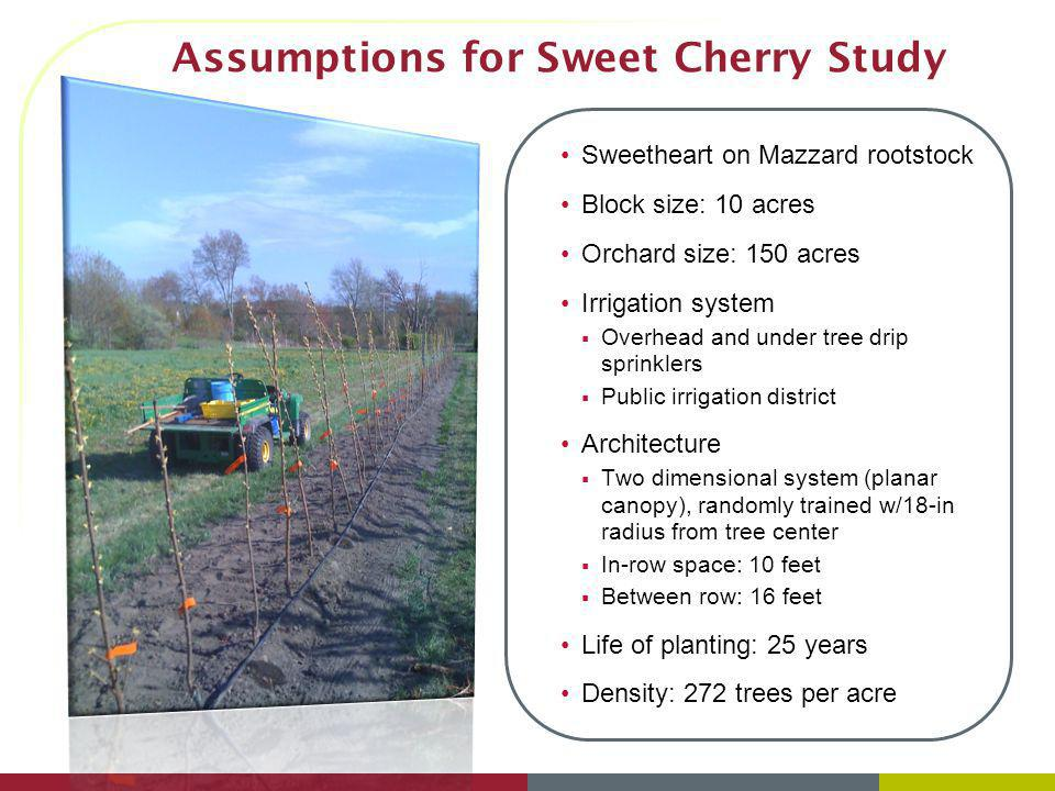 Assumptions for Sweet Cherry Study