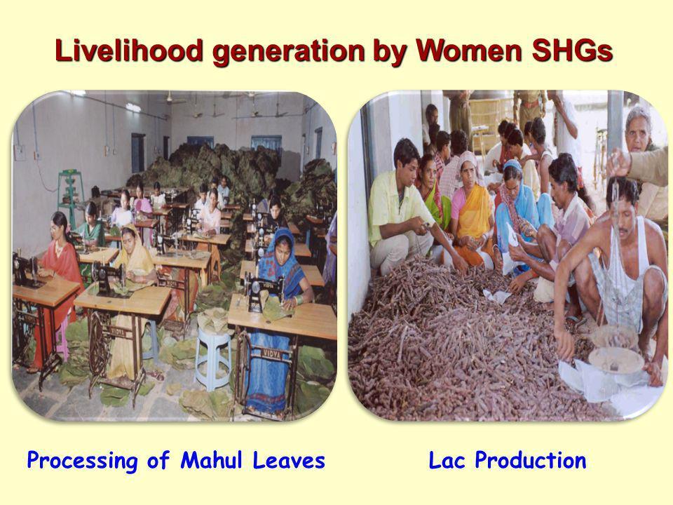 Livelihood generation by Women SHGs Processing of Mahul Leaves