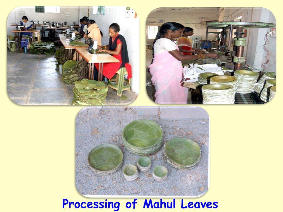 Processing of Mahul Leaves