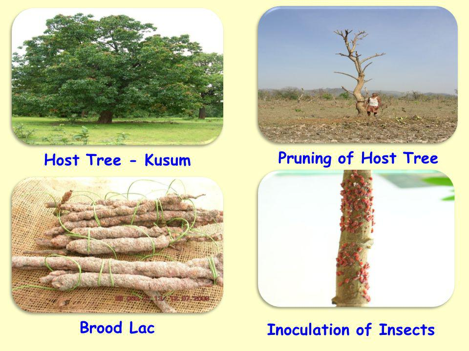 Inoculation of Insects