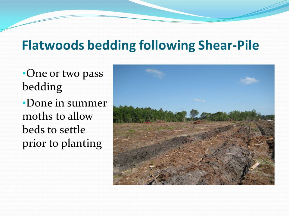 Flatwoods bedding following Shear-Pile